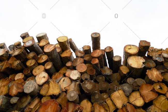 Ends of freshly logs stacked in a large pile