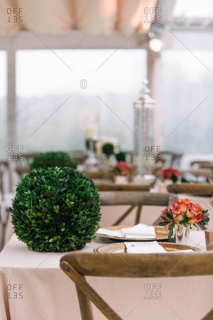Plants and flowers on wedding table