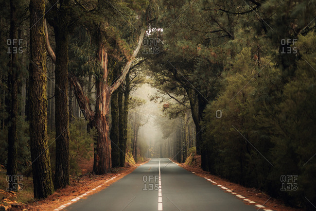 Road through a dense misty forest