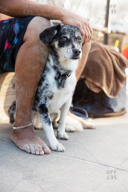 Dog between sandy legs, Raleigh