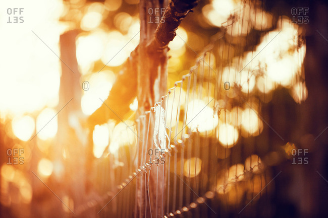 Close up of fence in sunlight, San Antonio