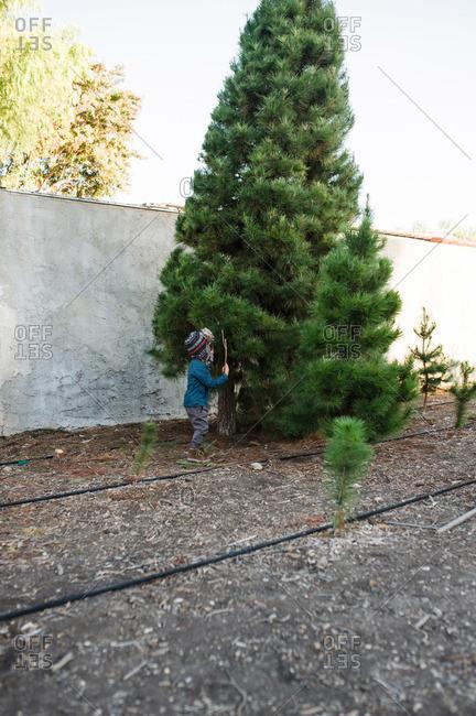 Kid by tree on a tree farm