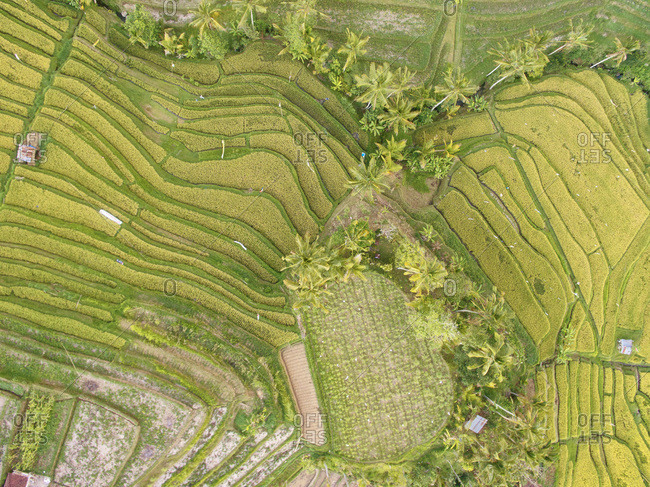 Rural plots in tropical landscape