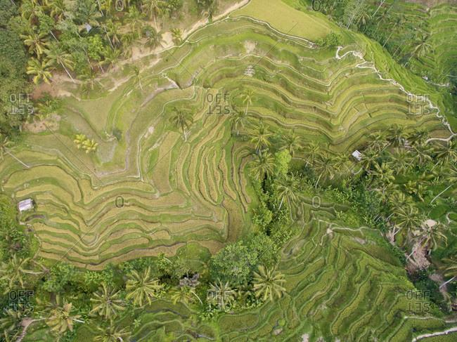 Rural plots in a tropical landscape