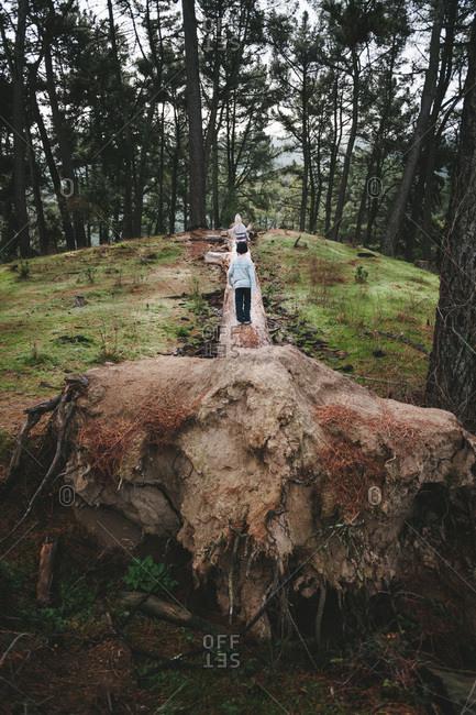 Children exploring an old fallen tree