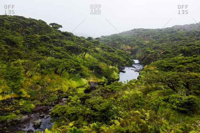 Stream flowing down a green hillside on Flores Island, Portugal