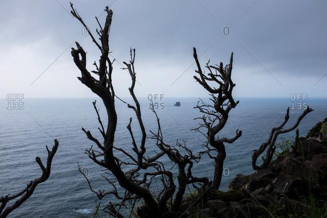 Tree branches on the edge of a seaside cliff at Ponta da Faja, Portugal