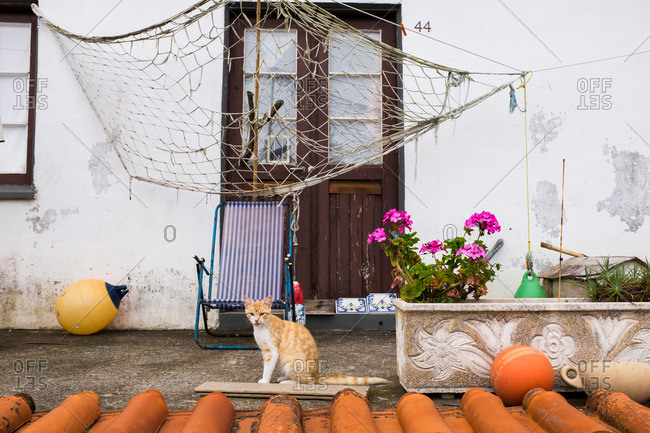 Cat in front of a house at Ponta da Faja, Portugal