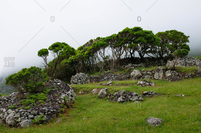 Trees inside a rock wall on a hillside on Flores Island, Portugal