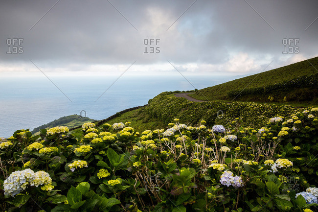 Flowers along a road on the seaside island of Corvo, Portugal