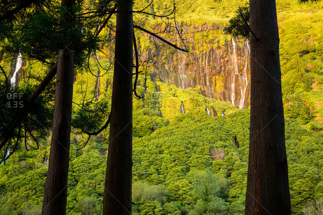 Trees and waterfalls on a cliff side at Poco da Alagoinha, Flores Island, Portugal