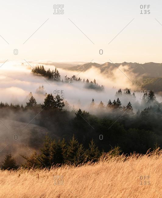 Mist over Mount Tamalpais State Park in California