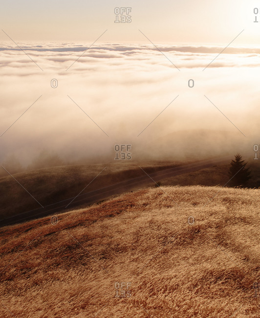 Fog over Mount Tamalpais State Park in California