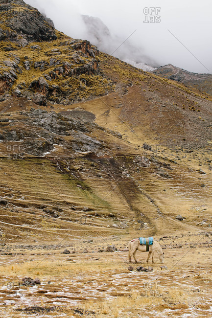 Horse with saddle at Ausangate in the Andes Mountains of Peru