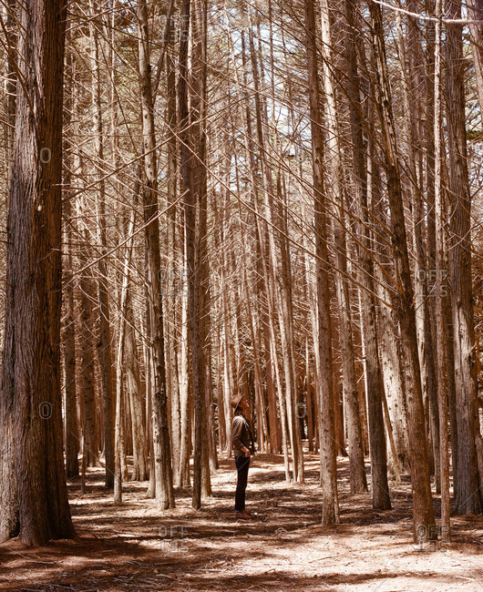Man in a forest along the coast in California