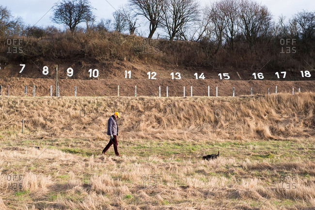 Person and dog walking in a field of dried grass in front of a series of numbers on a hill