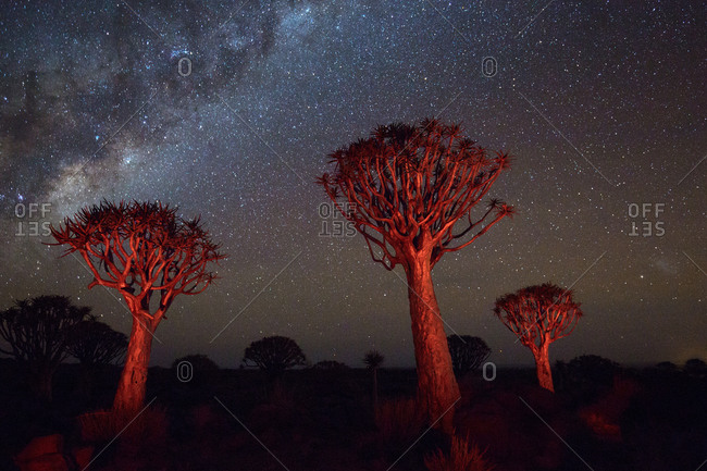 The Milky Way over quiver trees, Namibia