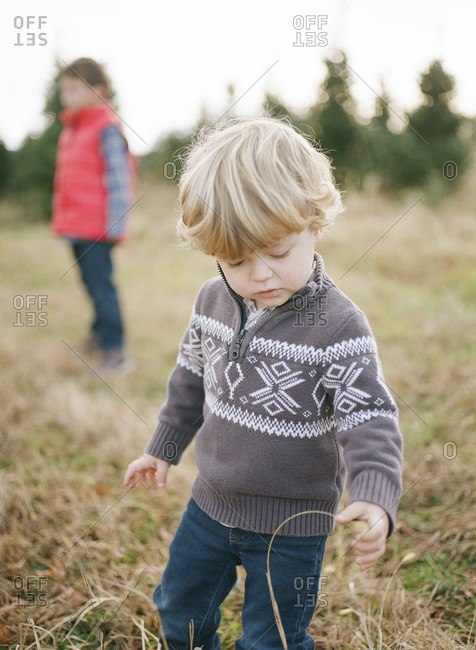 Little boy looking at a stalk of grass in a field