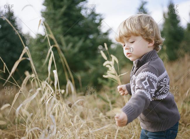 Little boy playing in a grassy field