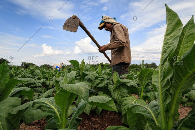 Salta Province, Argentina - January 4, 2012: Man tending to crops