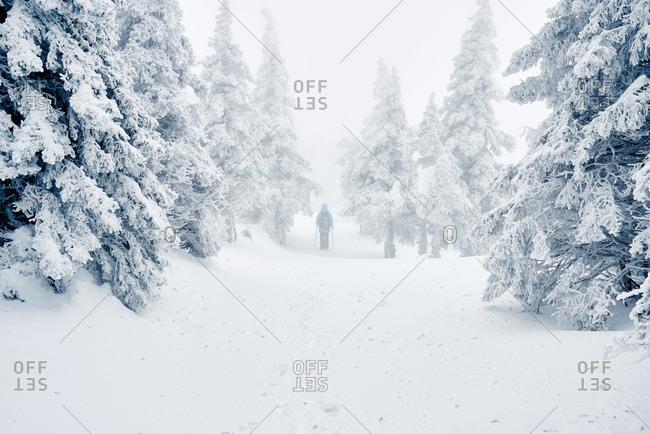 Hiker walking among snowy trees