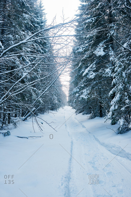 Road among snowy trees