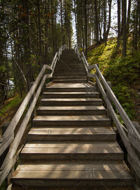 Wooden staircase on a wooded hill, Yellowstone National Park