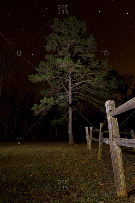 Pine tree and a rustic wooden fence at night, Troy, NC