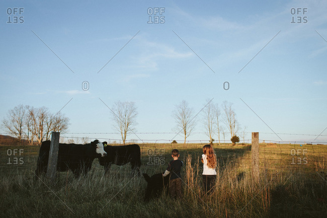 Brother and sister looking at cows through a wire fence