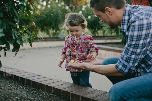 Father showing his daughter a flower petal
