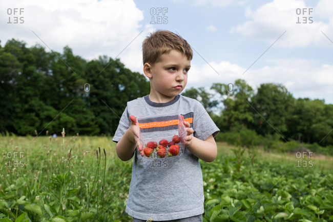 Boy with strawberries in a patch