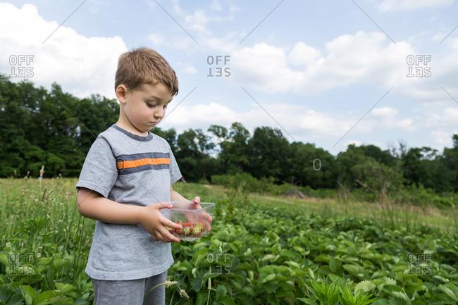 Boy examining carton of strawberries