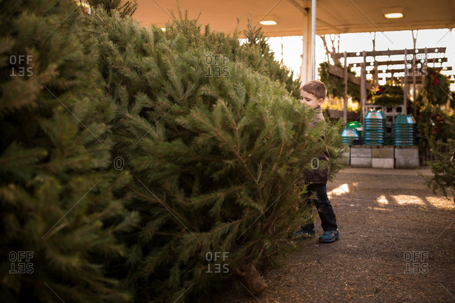 Boy choosing Christmas tree in lot