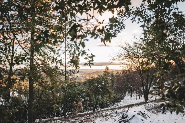 Hillside woodland in winter