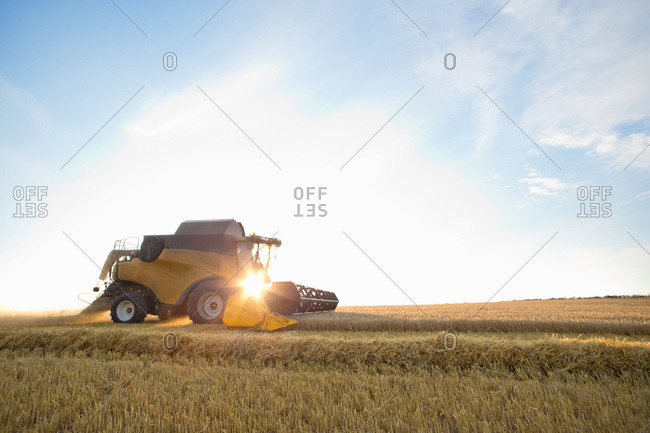 Combine harvester, harvesting wheat, in sunny rural field