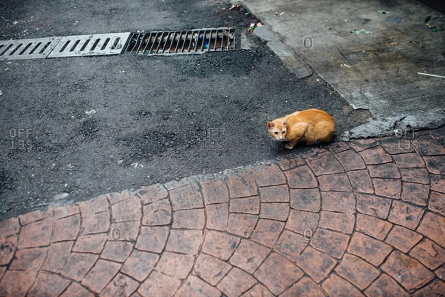 Cat on the street next to a gutter