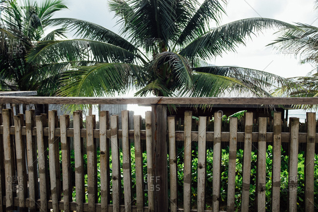 Bamboo porch railing and palm trees