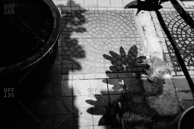 Shadows of plants on paving stones