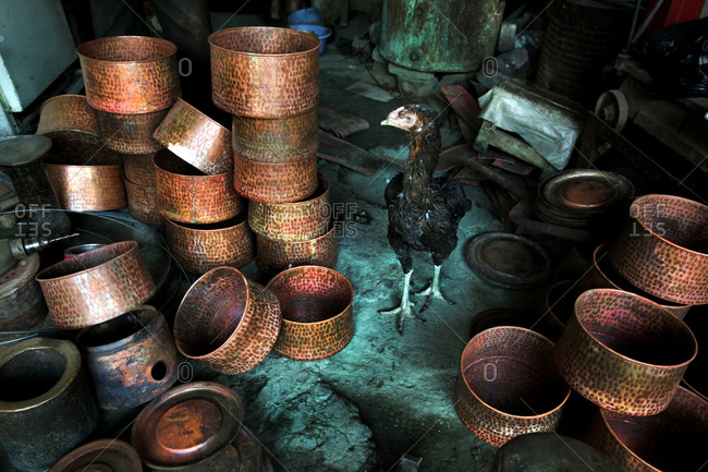 Chicken walking among hammered copper bowls