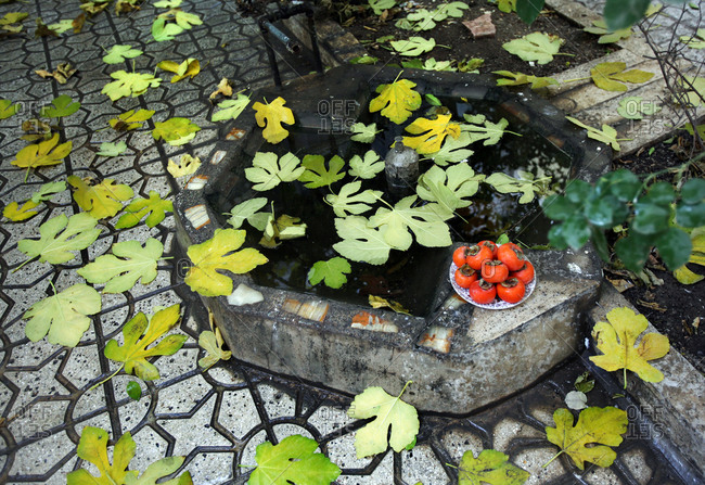 Plate of persimmons next to fountain with fallen fig leaves