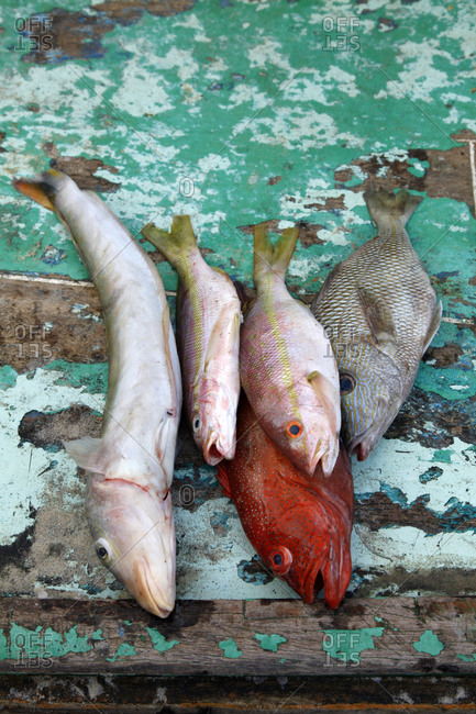 Freshly caught fish for sale, Iguape, Fortaleza district, Brazil