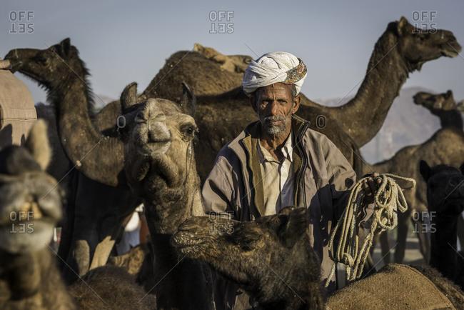 Rajasthan, India - November 18, 2015: Man standing among a herd of camels at the Pushkar Camel Fair, India
