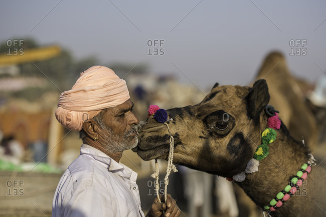 Rajasthan, India - November 20, 2015: Indian man nuzzling a camel