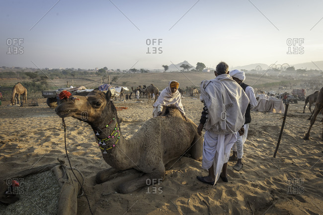 Rajasthan, India - November 21, 2015: People gathered around a camel in the sand