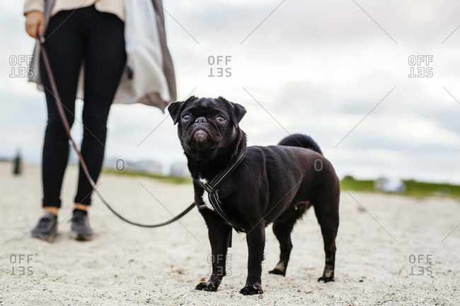 Dog on woman's leash at beach