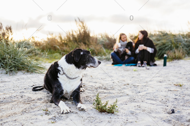 Dog lying on beach near two women