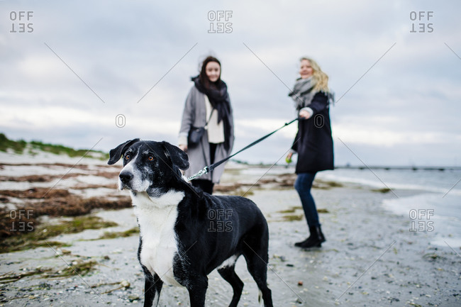 Excited dog on beach pulling at leash