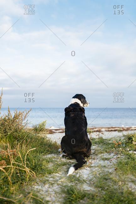 Dog sitting on edge of beach