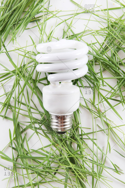 Compact fluorescent bulb on blades of grass