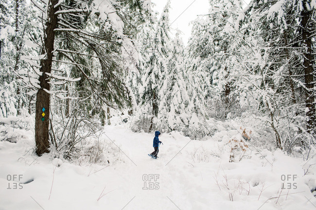 Boy snowshoeing on a forest trail
